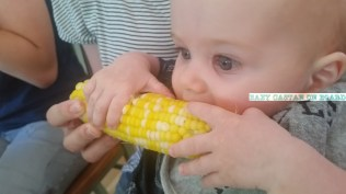 Teething corn