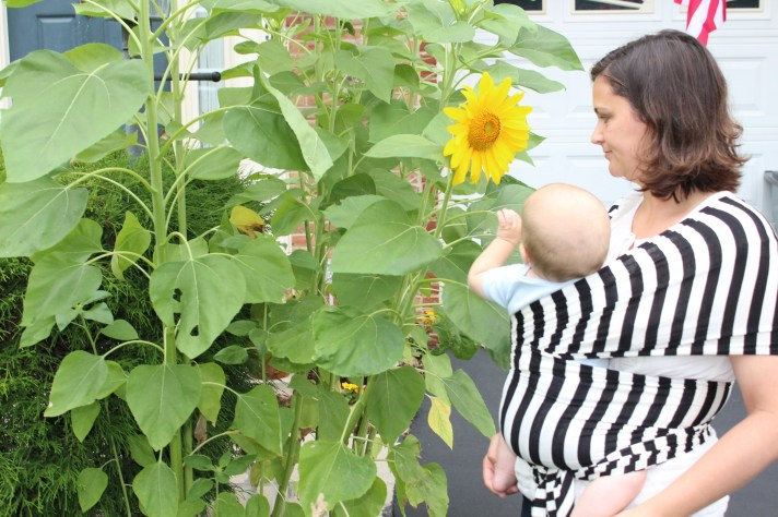 Baby wearing wrap sunflower