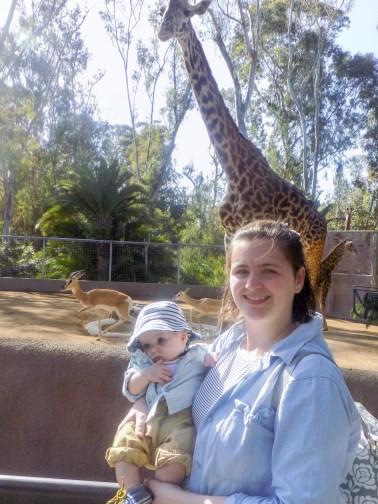 zoo-giraffe-san-diego-2-of-1