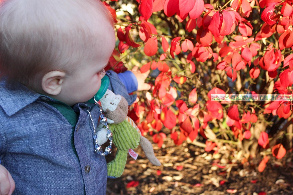 gifts-0-3-months-templeton-bush