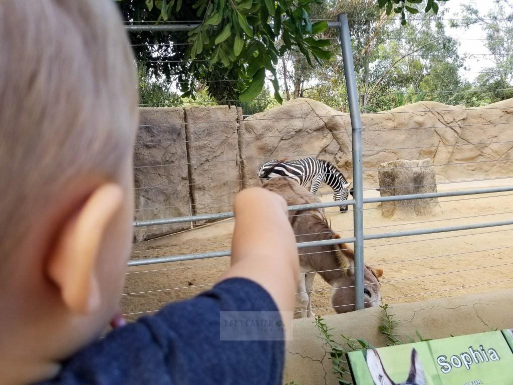 San Diego with a Toddler ZOO zebra