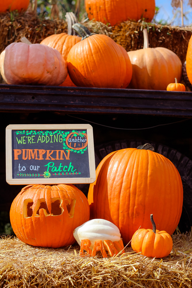 Family | Exciting Update & a Boo-tiful Halloween Pregnancy Announcement! featured by top DC Mommy blogger Baby Castan On Board
