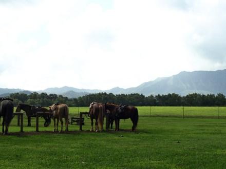 horseback ride kauai