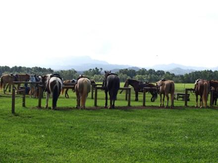 Princevill Ranch Adventures