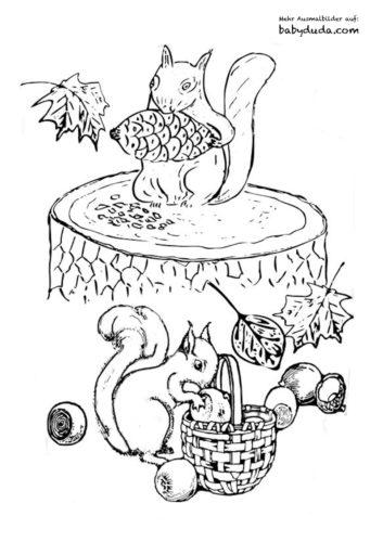 Ausmalbilder Für Erwachsene Eichhörnchen