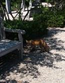 It's a fox.