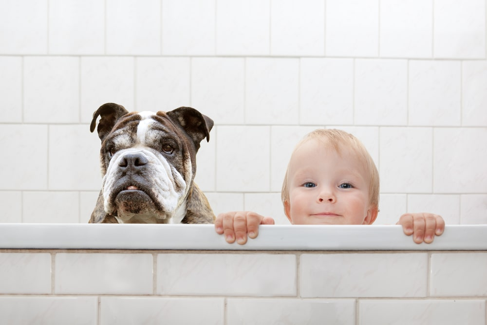Relação do pet com a criança