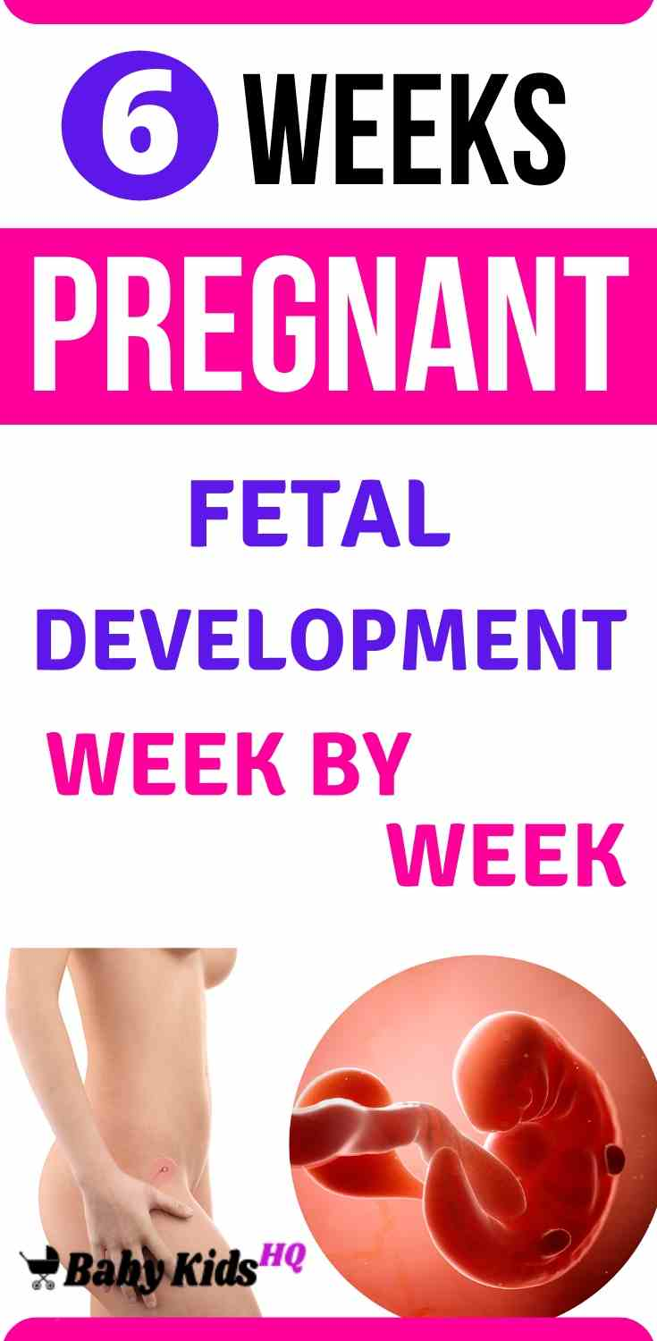 Baby Development 6 Weeks Pregnant