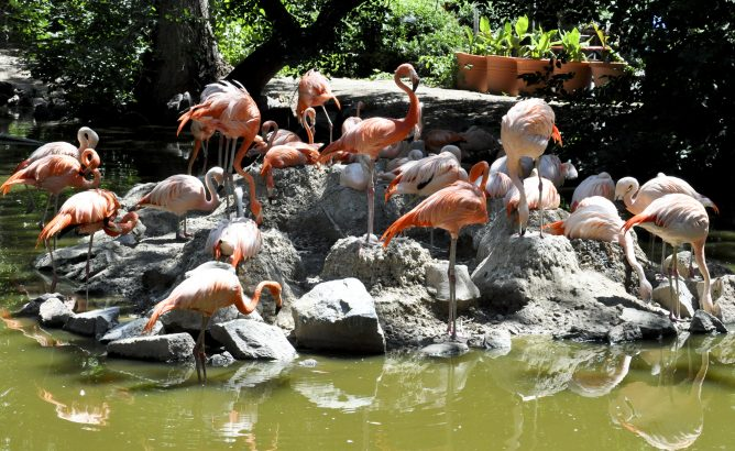 Animals in the Zoo, Advantages and Disadvantages of Zoos.