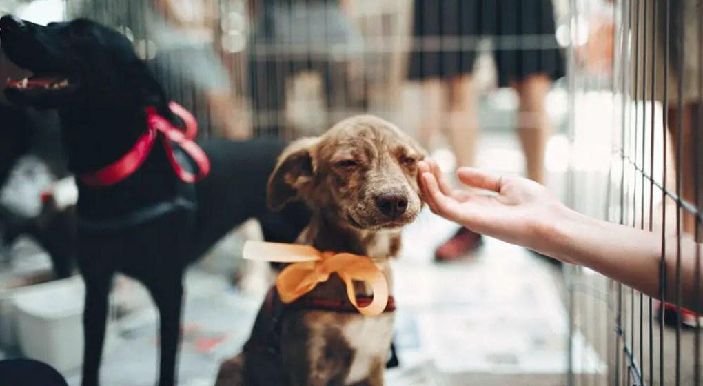 6-dublin-animal-shelters