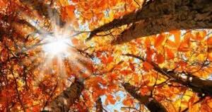 autumn leaves equinox