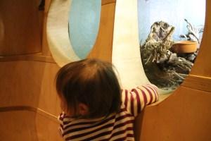 A Toddler's Visit To Inatura Dornbirn Austria
