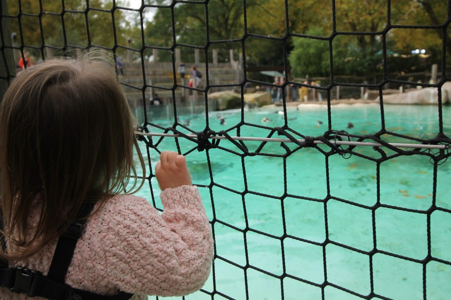 Visiting London Zoo with a Toddler