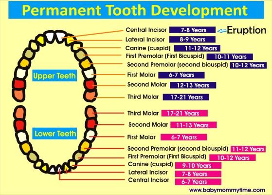 Tooth Eruption