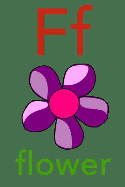 Baby Mozart Flashcard - F for flower