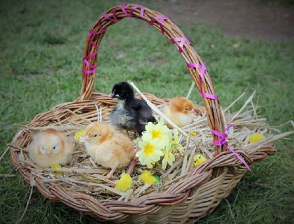 Easter Activities in the South West