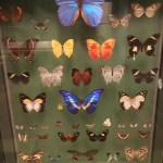 #SchoolHols2017 – Exeter Royal Albert Memorial Museum