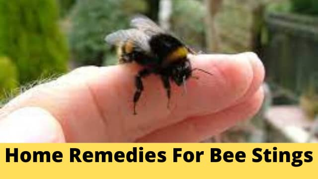 Best Home Remedies For Bee Stings