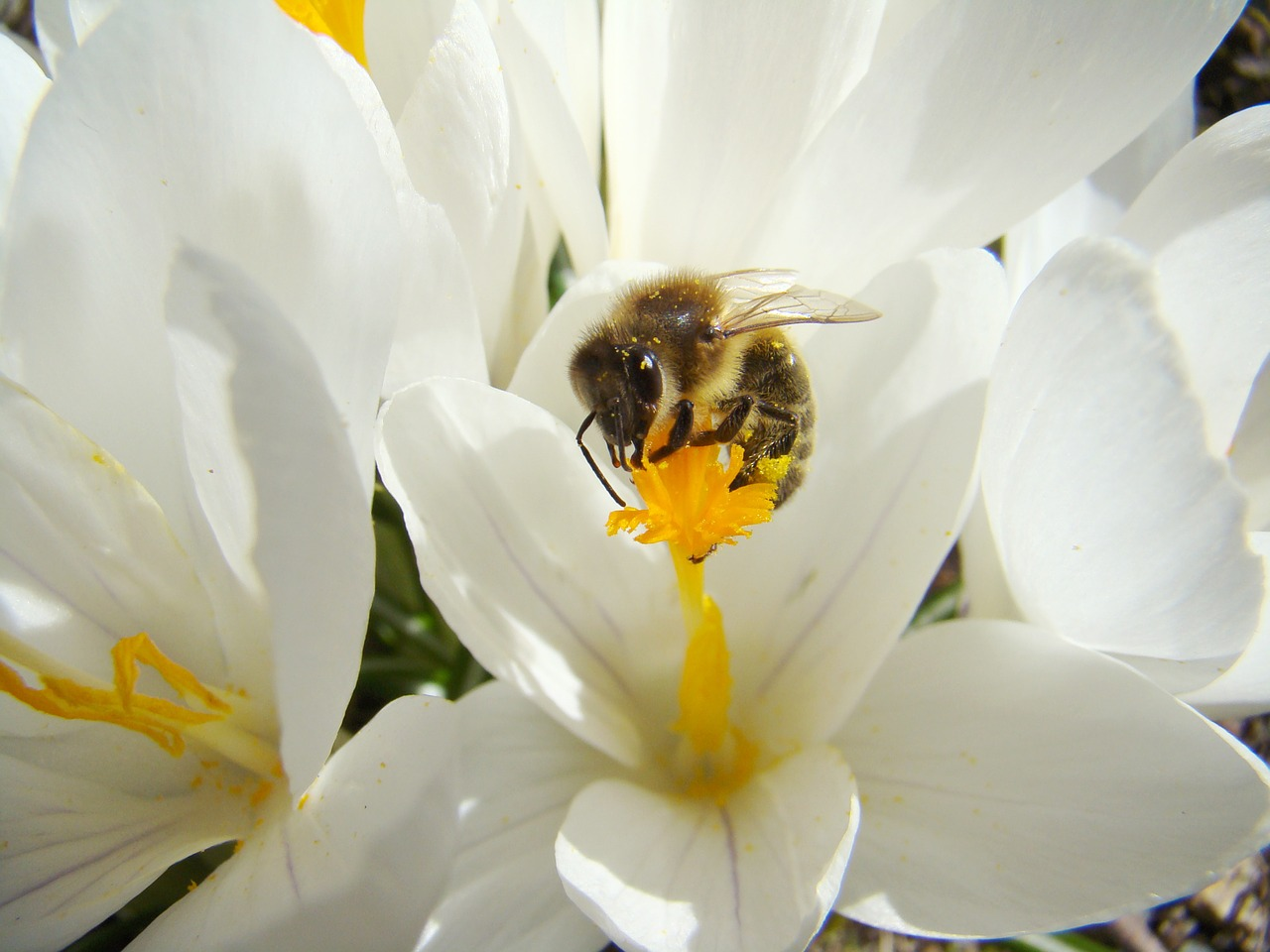 Wildlife Wednesday Great British Bee Count Amp Pollination