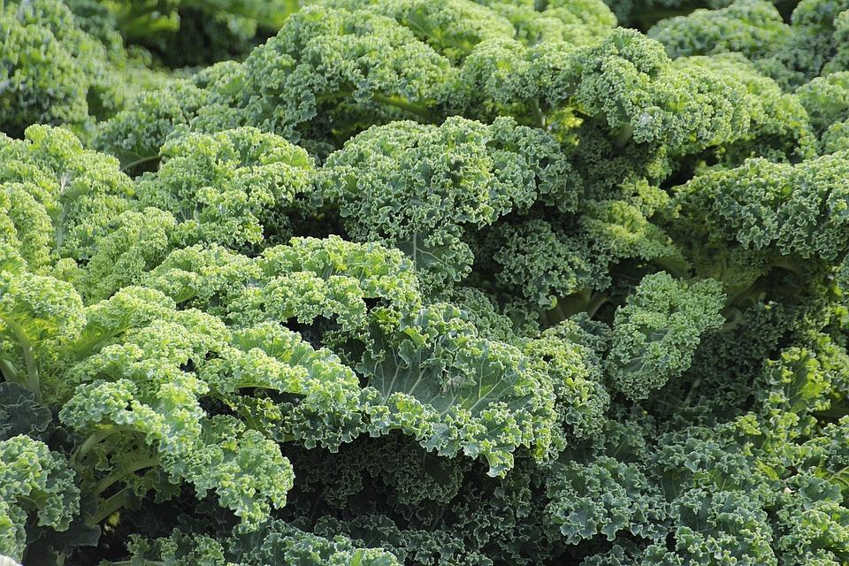 Educazione al Gusto: Come far Mangiare le verdure ai Bambini!