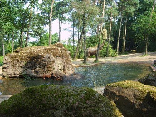 burgerszooolifant