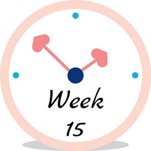 Zwangerschap week 15