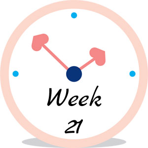 Zwangerschap week 21