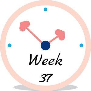 Zwangerschap week 37