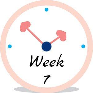 Zwangerschap week 7