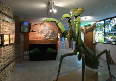 museo de los insectos