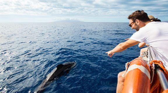 avistamiento_cetáceos