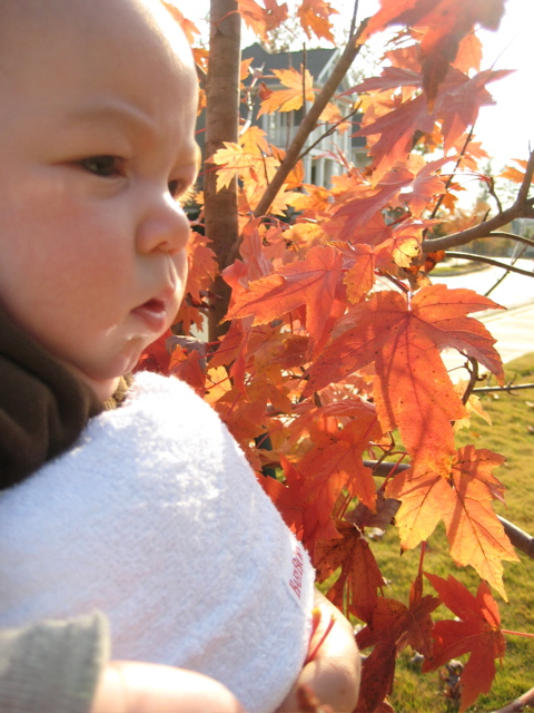 autumn-leaves-2.jpg