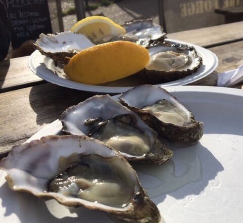 Whitstable rock oysters in the foreground; dwarfed by the burly natives.