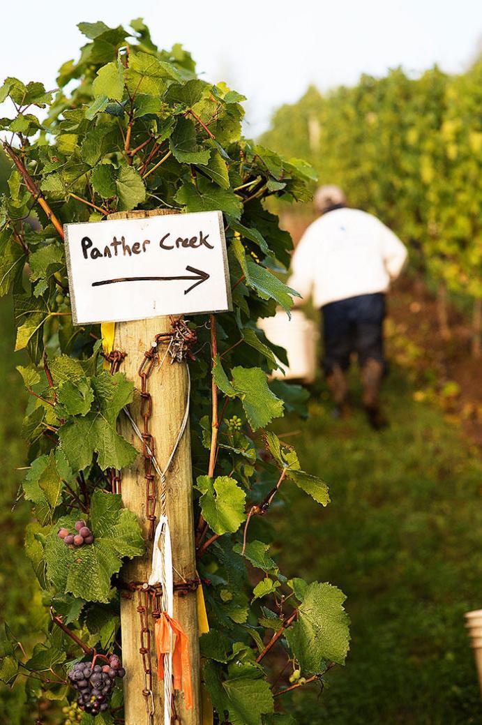 Panther Creek Vineyard
