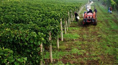 Vineyard Tractor