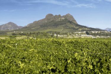 Stellenbosch-vineyards-(2)