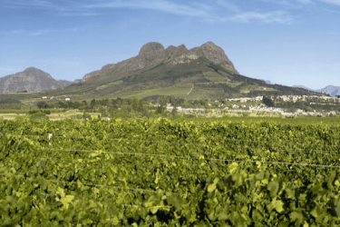 Stellenbosch-vineyards-(2)