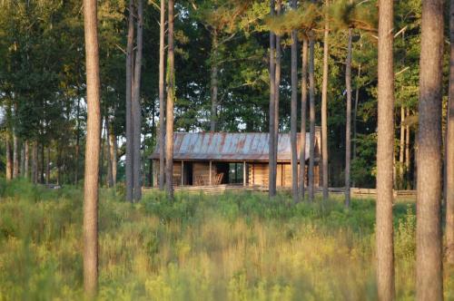 Timber Management