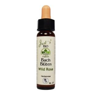 Wild Rose/ Hundsrose Nr. 37 Bio Bachblüten Tropfen original englische Qualität