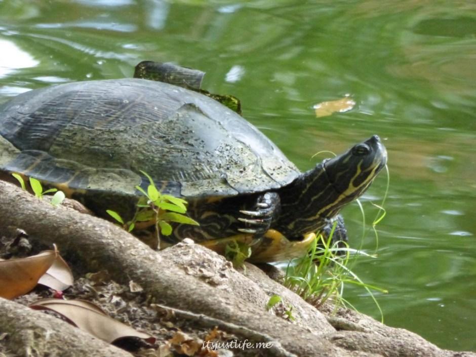 Turtle at itsjustlife.me