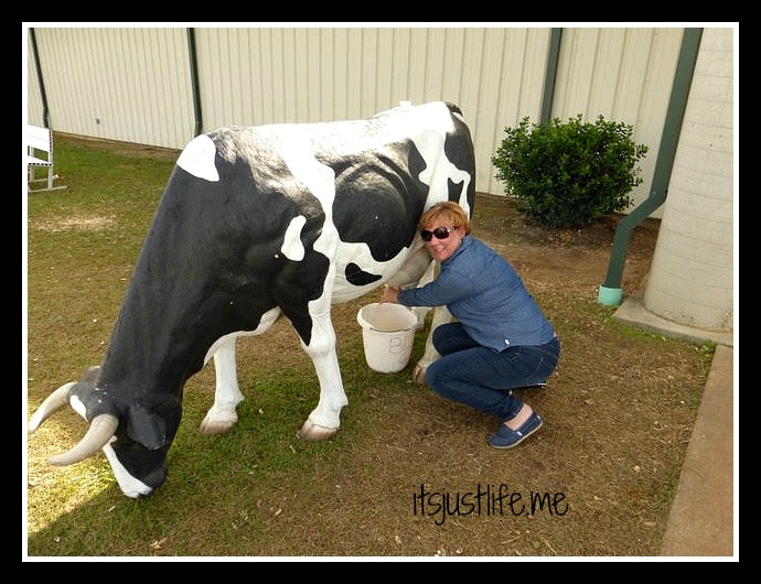 ba and cow