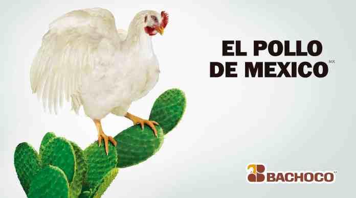 El pollo de México — Bachoco