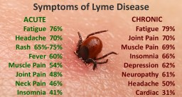 Symptoms of Lyme Disease