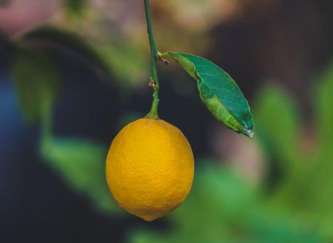 Citron : 10 façons de l'utiliser pour un ménage naturel