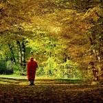 Медитация в гората и неспокойния ум