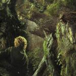 Разумни същества ли са дърветата? Със сигурност, твърди немски лесoвъд