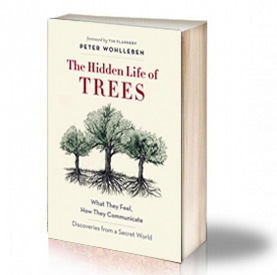 Book Cover: The Hidden Life of Trees - Peter Wohlleben