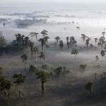 Тропическите гори вече отделят повече въглерод, отколкото кислород, откри ново проучване