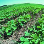 По-добрият начин – земеделие без оран
