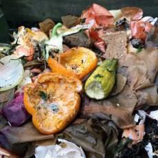 Защо в компоста има плесен и опасно ли е това?